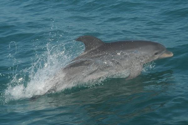 delfin solito1