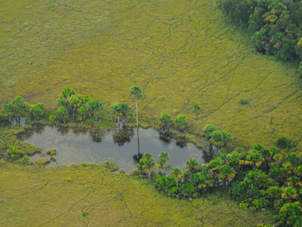 Vista aérea de morichal. Foto: Fernando Trujillo, Fundación Omacha.